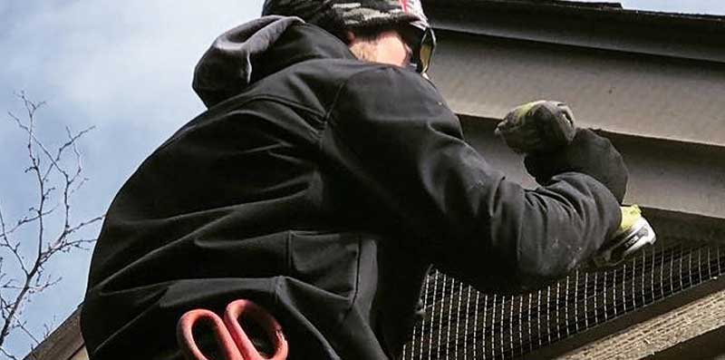 Repairing Screening For Bat Proofing
