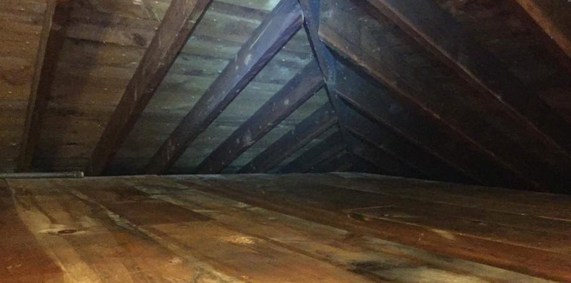 Buckeye Wildlife Solutions NW produced this spotless attic.