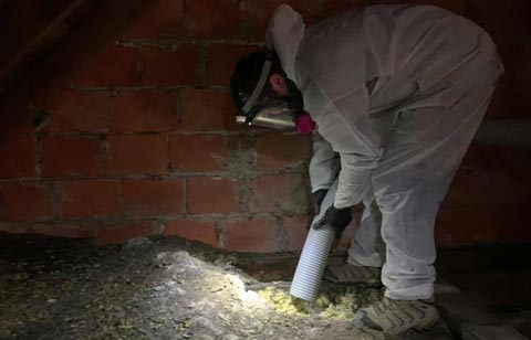 Attic Cleanup and Attic Sanitation  in Findlay Ohio.  Hire Buckeye Wildlife Solutions NW Bat Removal Findlay Ohio Team for attic restoration.